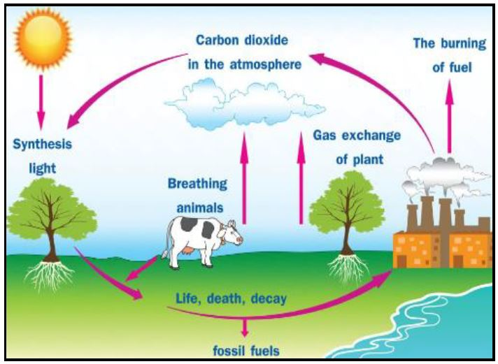Greenhouse Effect - Keeping the Balance