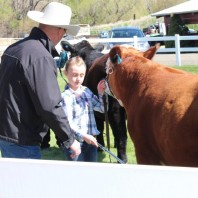 Judge teaching student about steer