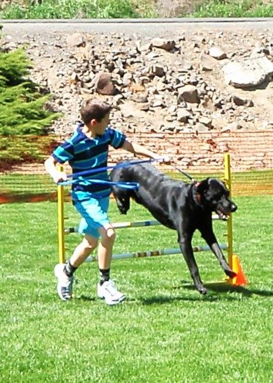 Boy showing dog