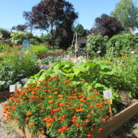 vegetables and flowers in raised beds in the Master Gardener Demonstration Garden at the Grays Harbor Fairgrounds