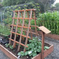 Hog-wire trellis arch for beans between two raised beds and wood-slat trellised cucumbers