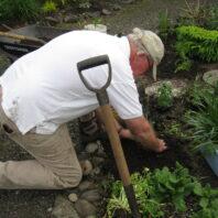 Master Gardener transplanting into landscape bed