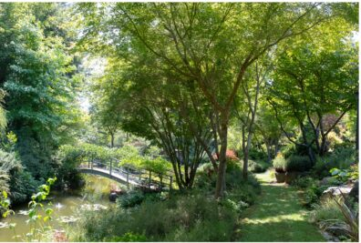 Wooded country garden with small pond and an arched bridge