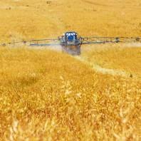 Ag-wheat-spray
