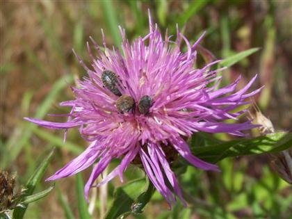 insectonplant(Custom)