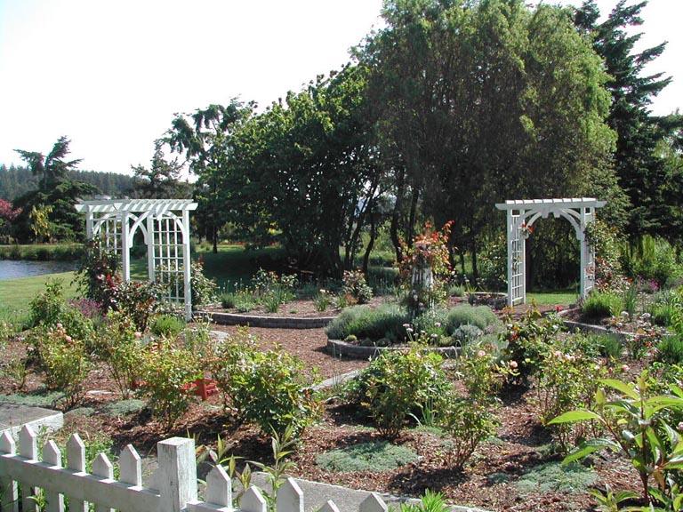 12 Established Rose Garden 6-6-06