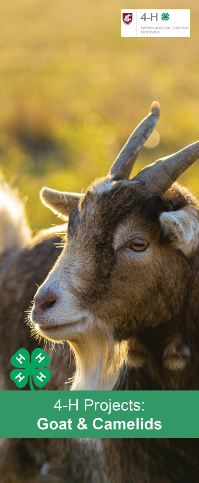 4-H Projects: Goats and Camelids with an image of a goat.