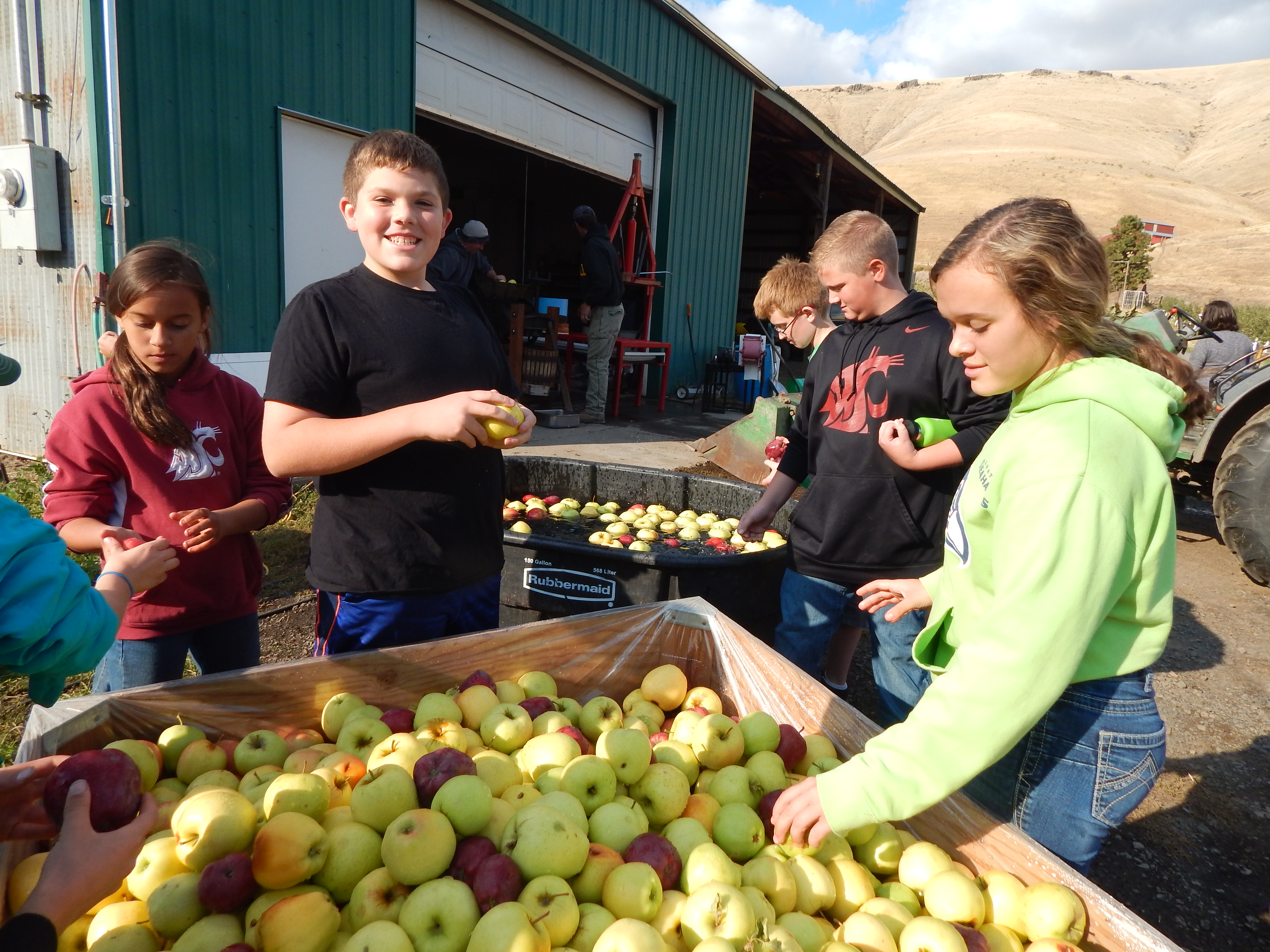 Children examining red and green apples.