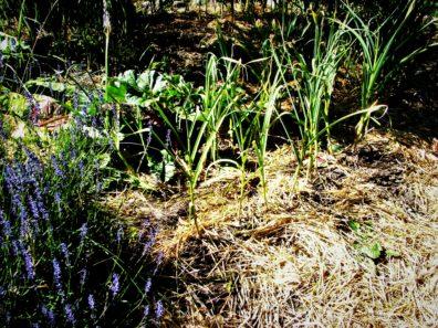 Betsy Wharton's Garden
