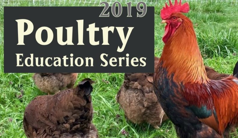 Poultry-Education-Series-Cover-Photo