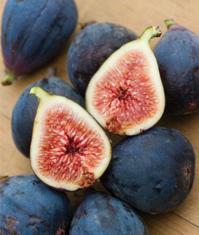 Fig Burpee