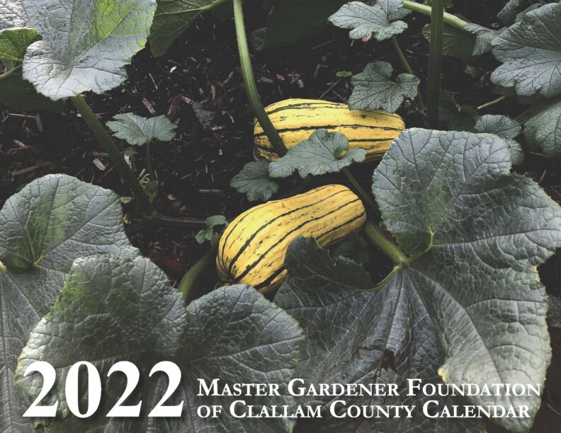 delicata squash and vines pictured on the cover of the 2022 Master Gardener Calendar