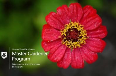 MG Prog Flower Pic