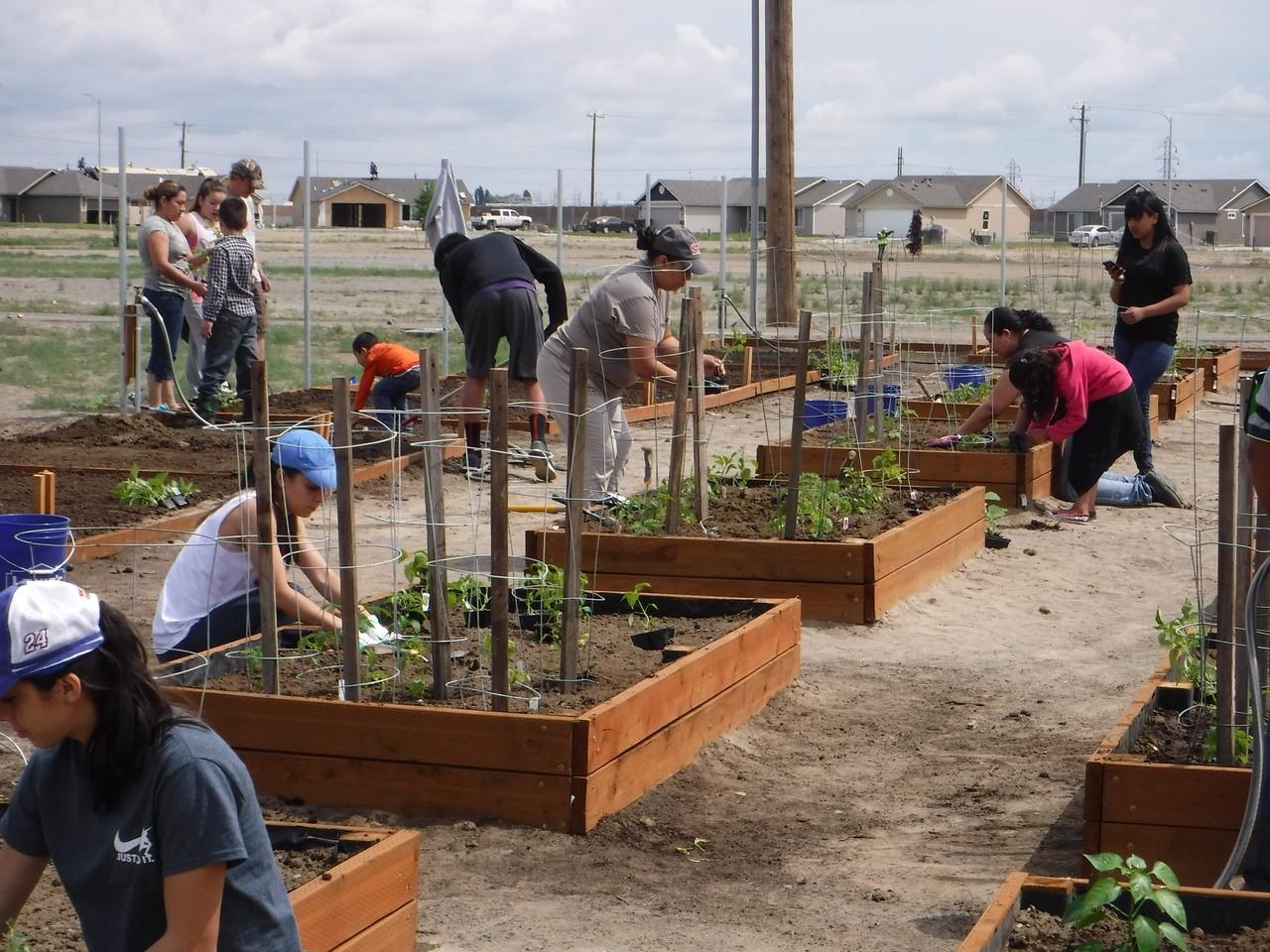Community members tending community garden boxes.