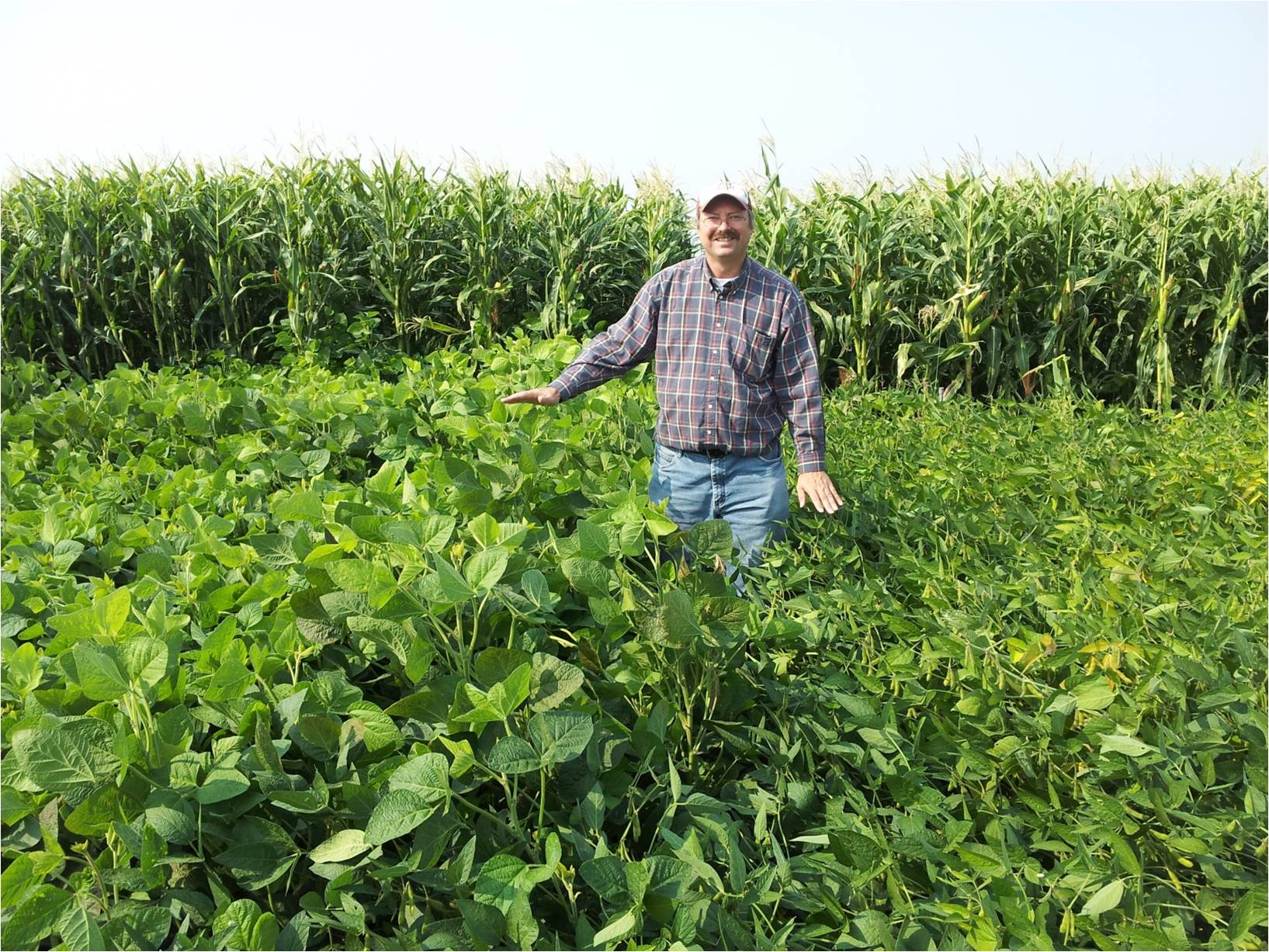 Steve Norberg standing in soybean field.