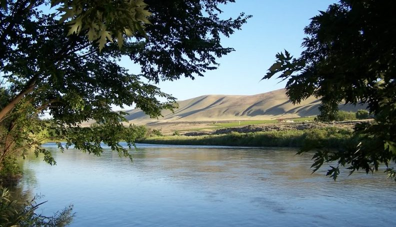 View through trees overlooking Yakima river and Horse Heaven Hills.