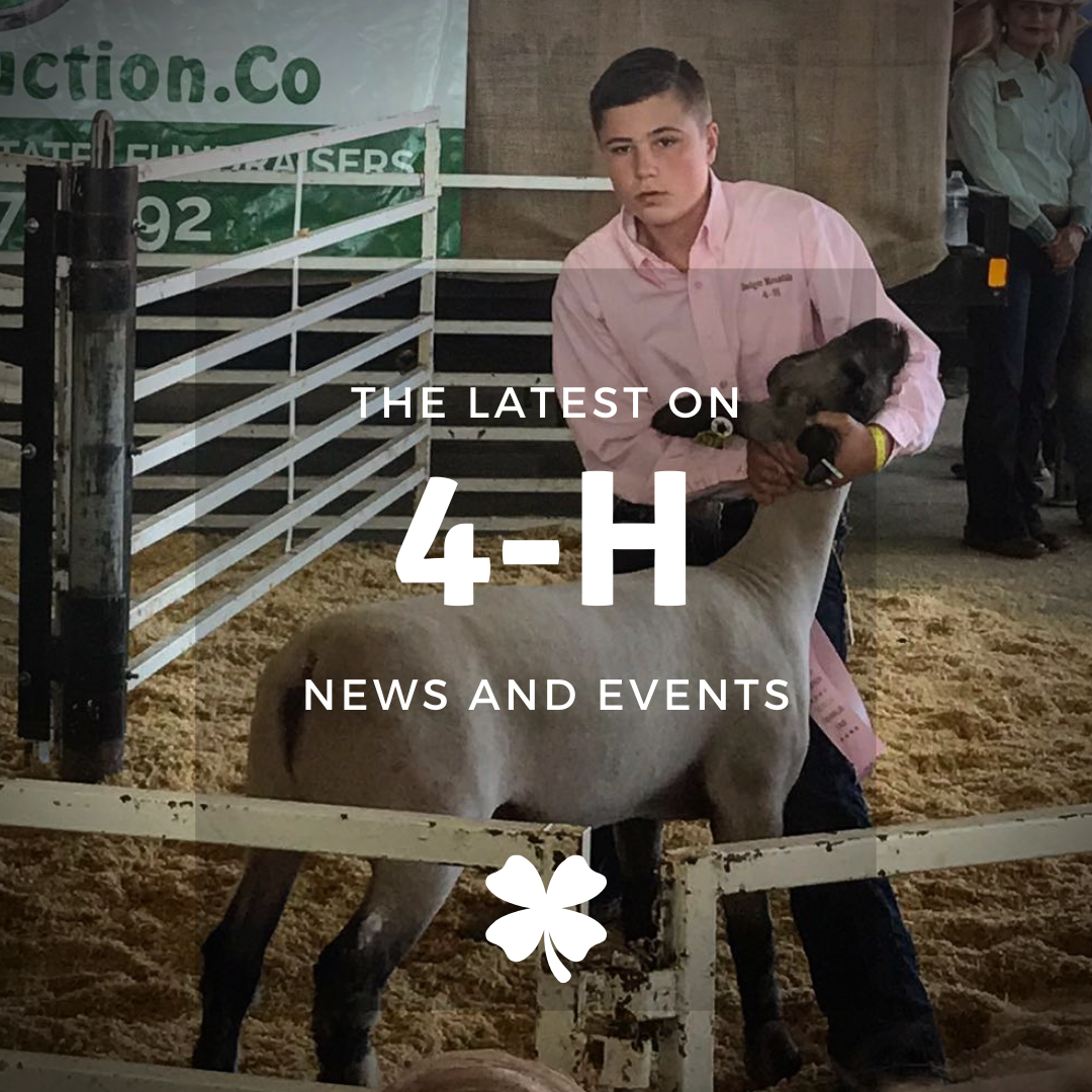 "picture of boy showing a lamb at fair. Text says ""The latest on 4-H news and events"""