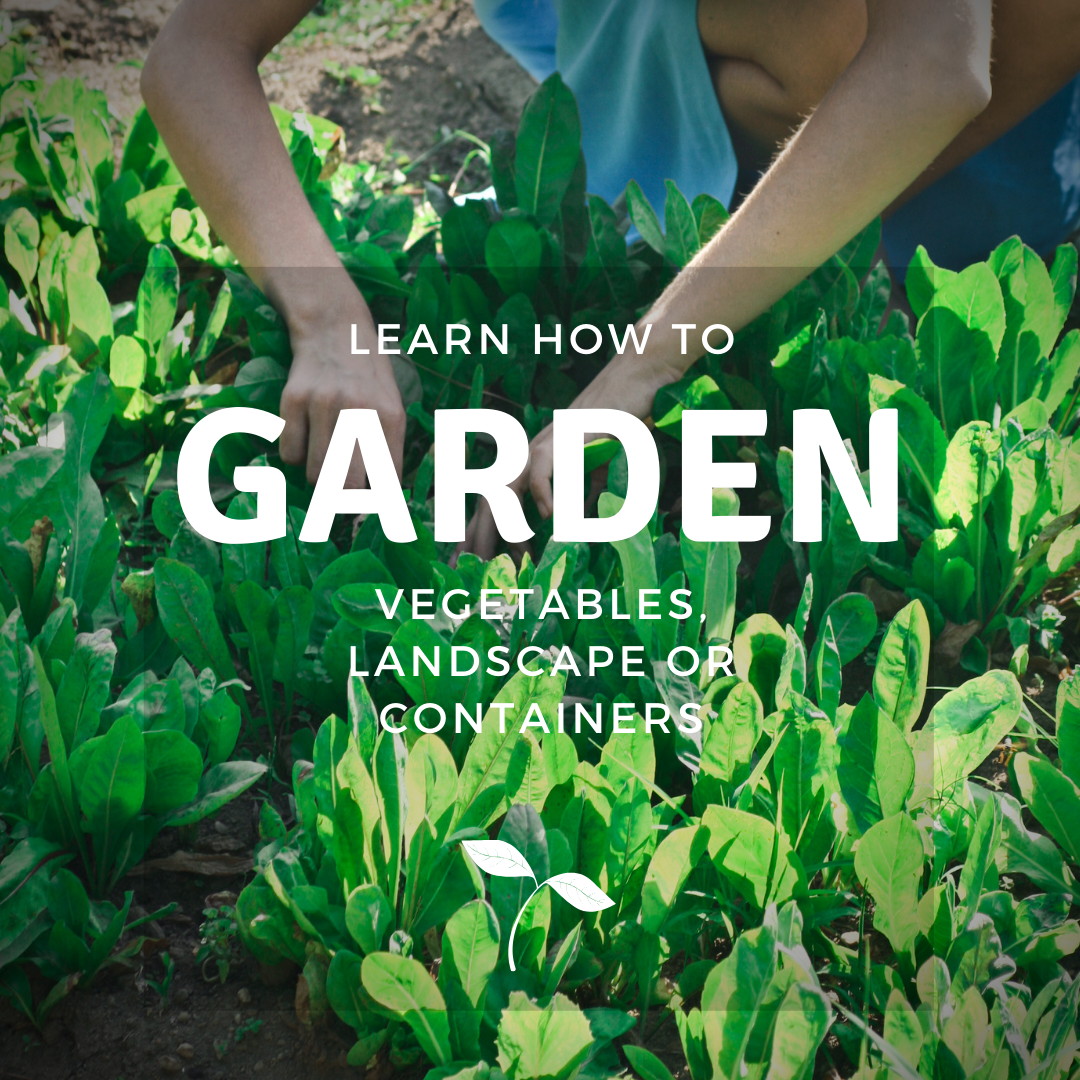 Learn how to garden: vegetables, landscapes or containers