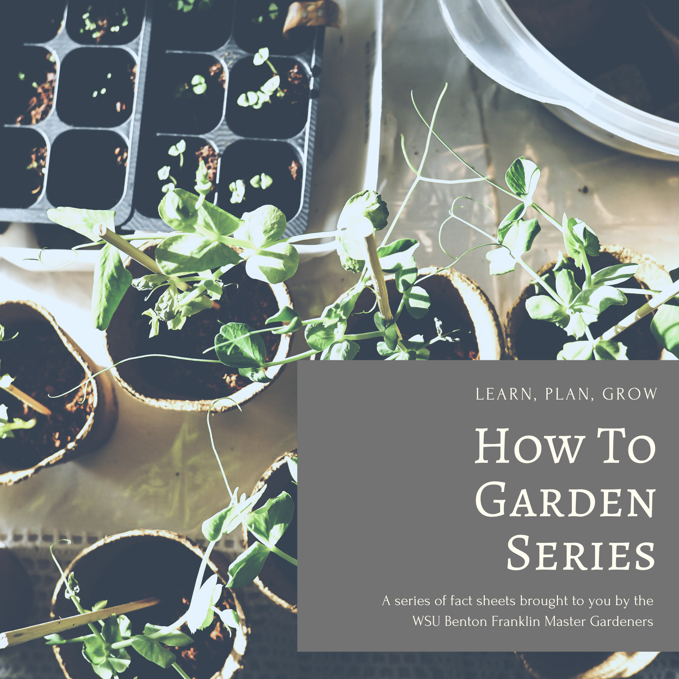 Picture of garden pots with the words Learn, Plan, Grow. How to Garden Series. A series of fact sheets brought to you by WSU Benton Franklin Master Gardeners.