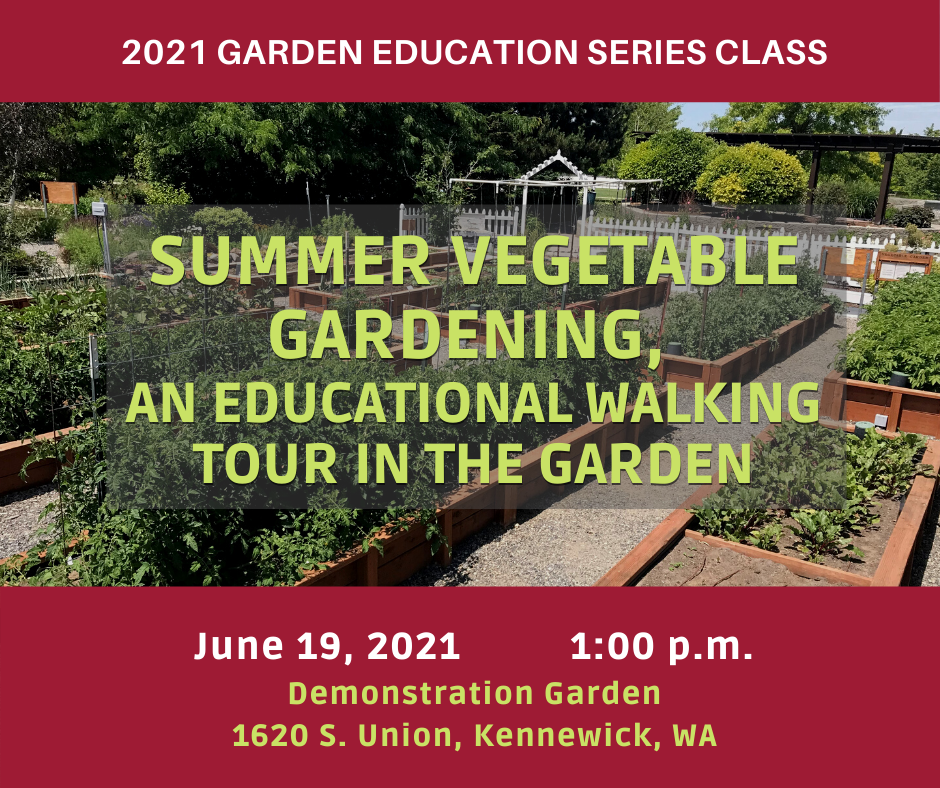raised garden beds pictured, 2021 Garden Education Series Class: Summer Vegetable Gardening, an Educational Walking Tour in the Garden. June 19th, 2021, 1:00 p.m., at the Demonstration Garden, 1620 S. Union, Kennewick, WA