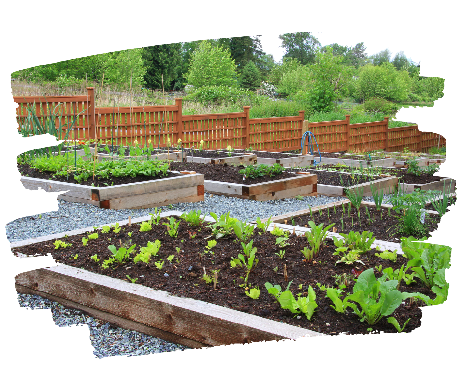 community garden raised beds