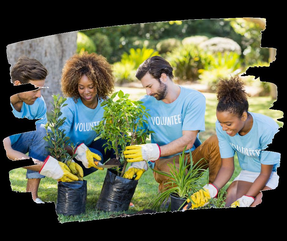 volunteer team planting