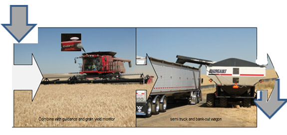 Combine in wheat harvest and loading wheat into trucks