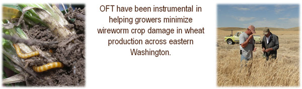 OFT have been instrumental in helping growers minimize wireworm crop damage in wheat production across eastern Washington.