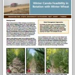 Winter-Canola-Feasibility-Cover
