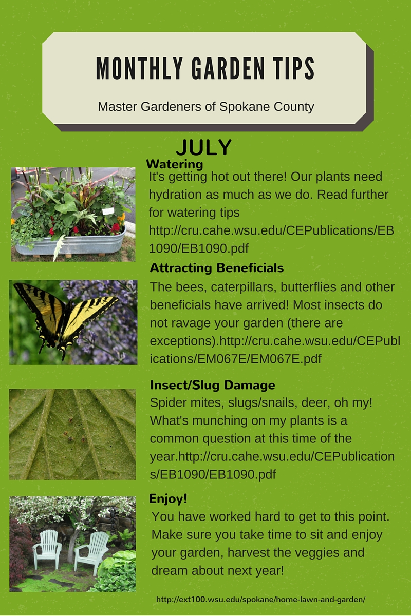 Garden in august in a garden -  August
