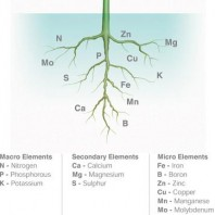 nutrients-plants-elements