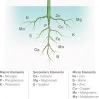 nutrients-plants-elements