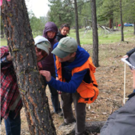 foresters examining a tree