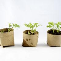 """""""seedlings"""""""