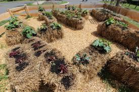 """""""straw bale garden"""""""