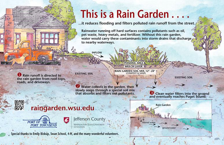 Local rain gardens jefferson county washington state for Home rain garden design