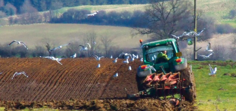 tractor-seagulls2