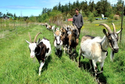 our-story-scott-goats