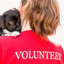 "A woman is holding a dog over her shoulder, her shirt says ""volunteer"""