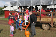City dwellers love to visit rural farms which offer fun activities