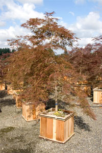 High priced nursery stock creates an up-scale image at any independent garden center.