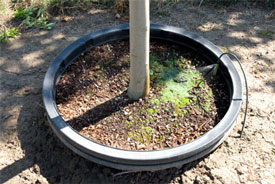 Pot in pot growers have to have excellent soil drainage so that their socket pots don't flood in the winter.