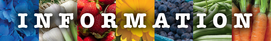 Information collage that is 7 colorful flower and fruit photos as a background to the word information.