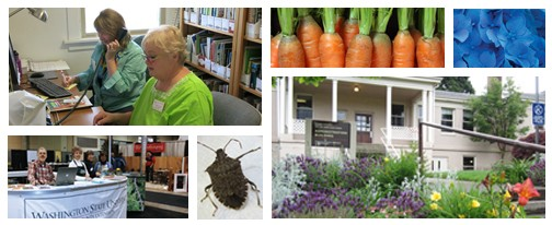 MGanswer collage 6 photos of volunteers in clinic, volunteers at home show booth, the front of Heritage Farm building, stink bug, carrots, blue hydrangea flowers.