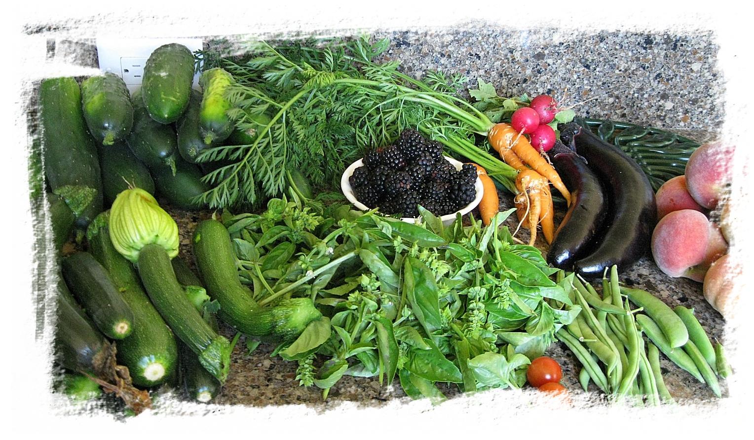 VegetableVariety