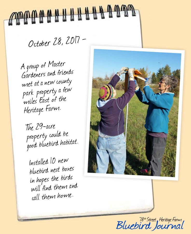 Bluebird Journal October 28, 2017. MGs and friends installed 10 bluebird boxes at a new property east of Heritage Farm. Photo of 2 women placing nesting box on post.