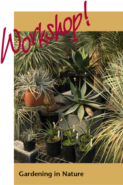 Desert or tropical looking plants with strappy or fleshy or spiky leaves in containers at a nursery.