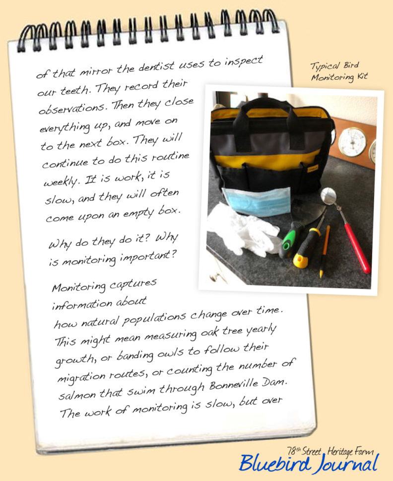 Bluebird Journal December 2018. This entry is about monitoring.
