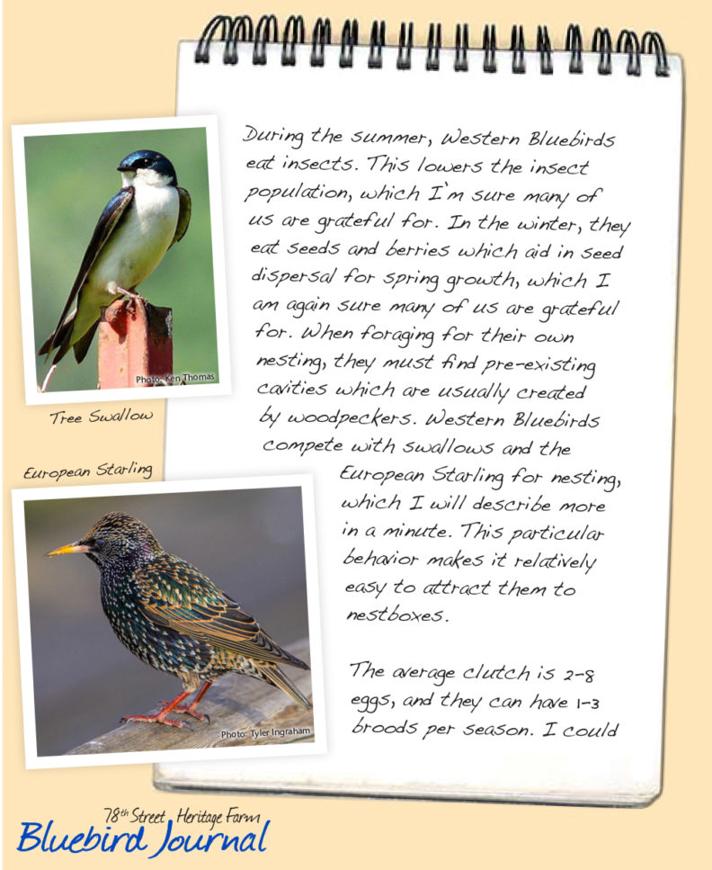 Bluebird Journal January 2019. This entry is about niche, and Bluebird niches.