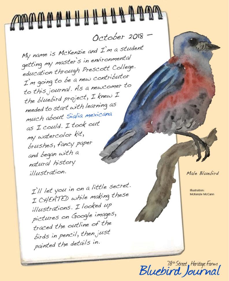 Bluebird Journal October, 2018. Introducing new contributor; painting of male bluebird.
